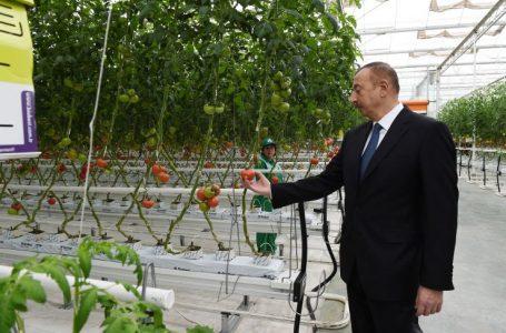 """Əliyev Zirə qəsəbəsində """"BAKU AGROPARK""""da görülən işlərlə tanış oldu – FOTO"""